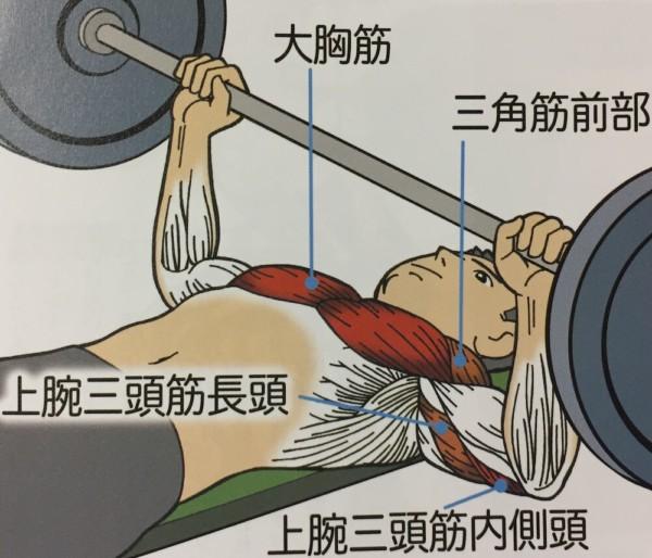 ベンチプレスで使う筋肉